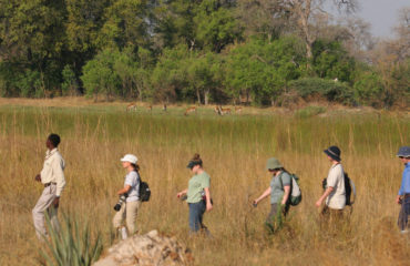 Bush Walk, Okavango Delta