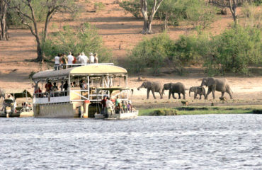Elephant along the river