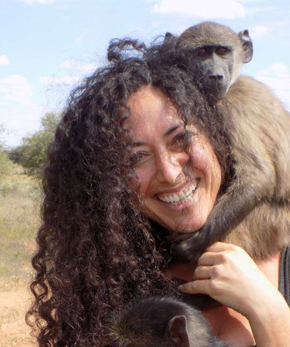 Baboon Welfare